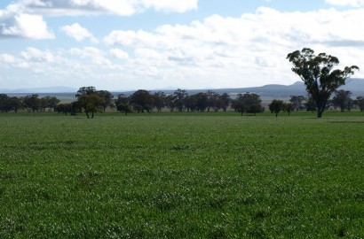 LIVERPOOL PLAINS
